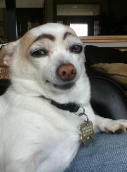 nads-facial-wand-eyebrow-shaper-funny-dog.png