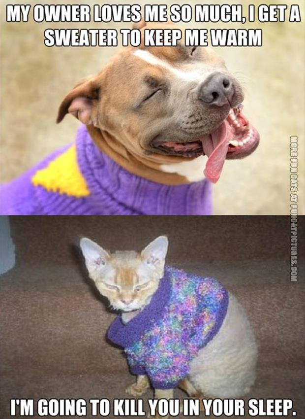 funny-cat-pics-cat-in-a-sweater.jpg